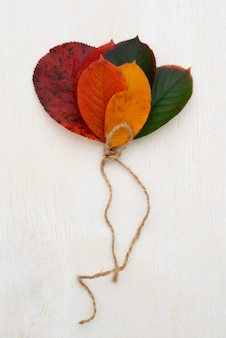 Vista superior de la selección de hojas atadas con una cuerda