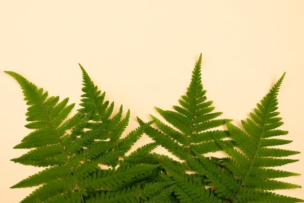 Vista superior de la selección de hojas de helecho.