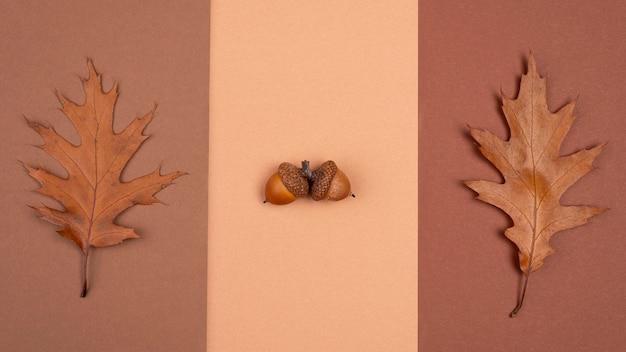 Vista superior de la selección monocromática de hojas y bellotas.