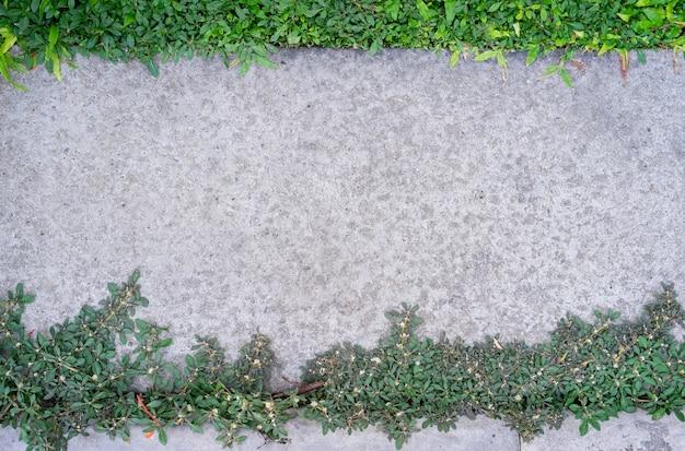 Vista superior del sendero de cemento con fondo de hierba verde en el jardín