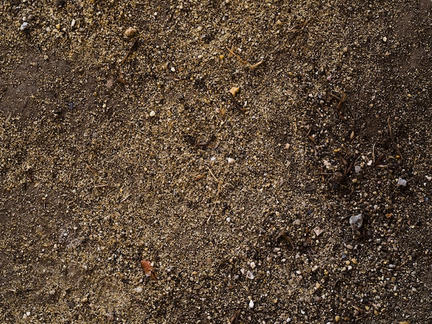 Vista superior del suelo orgánico fresco
