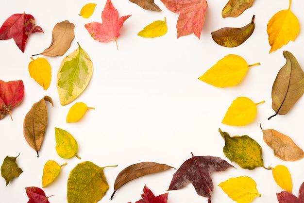 Vista superior surtido de hojas de otoño