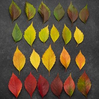 Vista superior del surtido de hojas de otoño