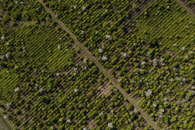 Vista superior de la textura de los árboles