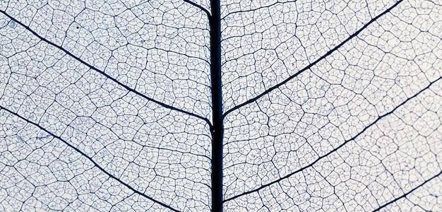 Vista superior de la textura de la hoja translúcida