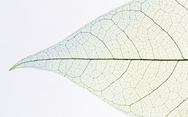 Vista superior de la textura de la hoja transparente
