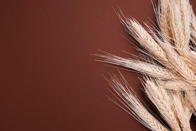 Vista superior de trigo orgánico con espacio de copia