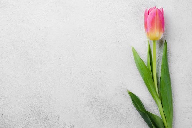 Vista superior de tulipán rosa en la mesa