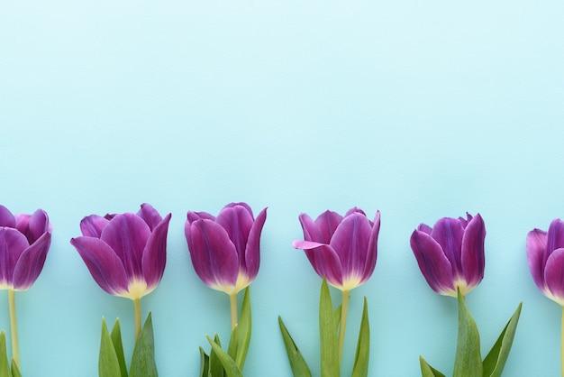 Vista superior de tulipanes morados sobre fondo azul, concepto de arreglo floral con espacio de copia