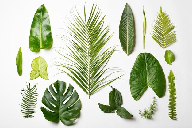 Vista superior variedad de concepto de hojas naturales