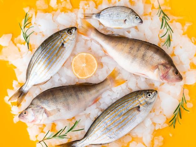 Vista superior variedad de peces frescos en hielo