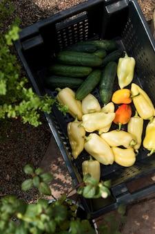 Vista superior de verduras frescas de un invernadero.