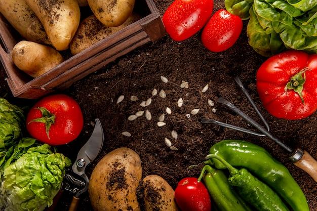Vista superior de verduras con semillas y ensalada.