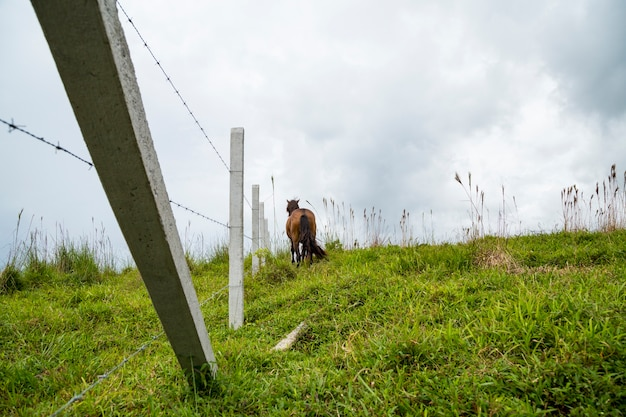 Vista trasera del caballo parado en el campo de vidrio cerca de la valla