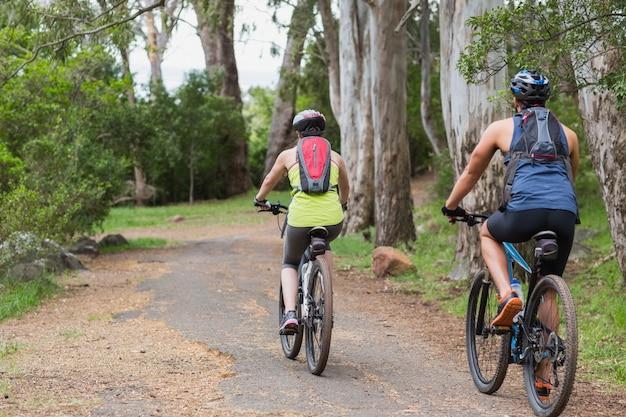 Vista trasera de ciclistas montando en sendero