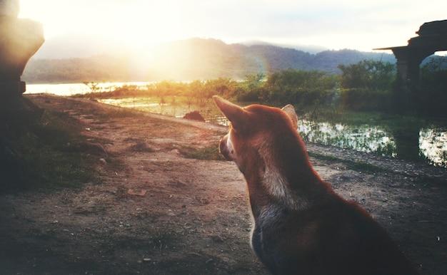 Vista trasera del perro sentado al aire libre paisaje rural
