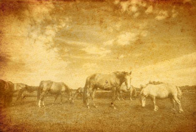 Vista vintage de los caballos en el prado