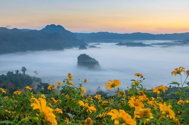 Vistas de montaña y flores del parque nacional phu langka, tailandia