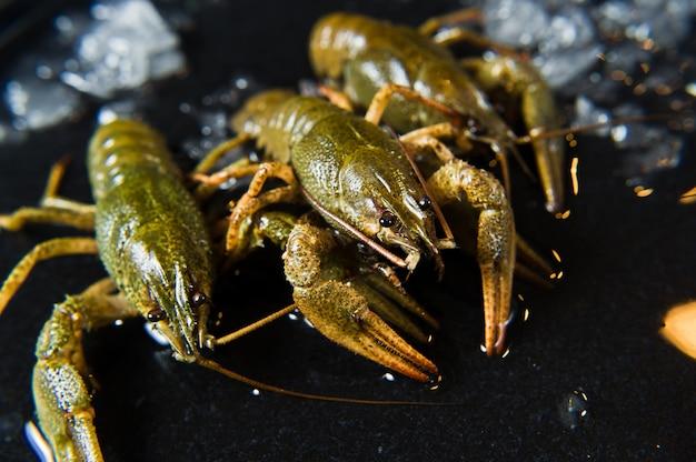 Viven los cangrejos en un plato de hielo.