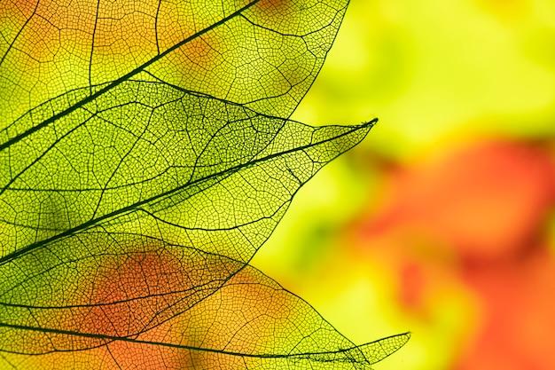 Vívidas hojas de otoño abstractas