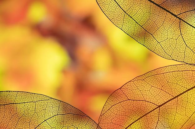 Vívidas hojas de otoño con espacio de copia