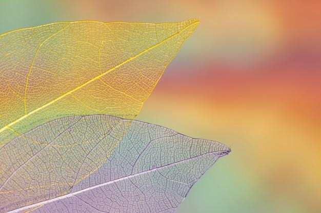 Vívidas hojas de otoño transparentes