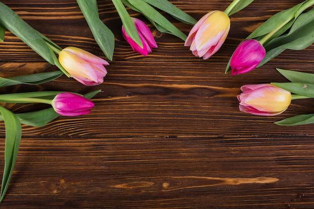 Vívidos tulipanes colocados en semicírculo.