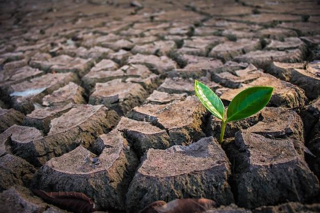 Vivir con sequía de árboles, sequía de tierra de grietas.