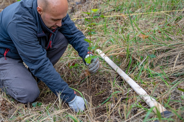 Los voluntarios hollán árboles jóvenes para restaurar los bosques después del ataque del escarabajo de la corteza