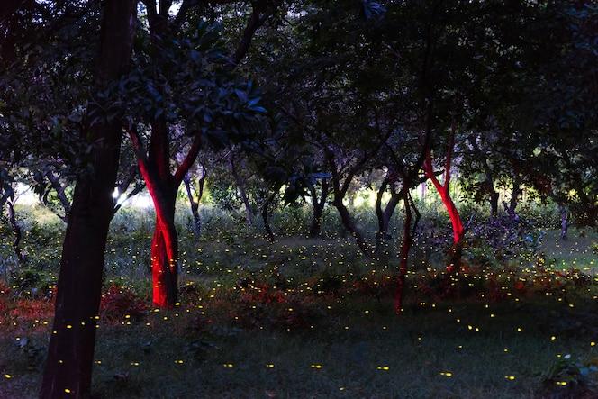 Vuelo de la luciérnaga en el bosque de la noche en tailandia, exposición larga con el grano.