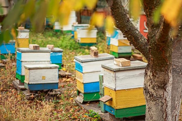 Vuelo de otoño de las abejas antes de las heladas. clima cálido en colmenar en otoño.