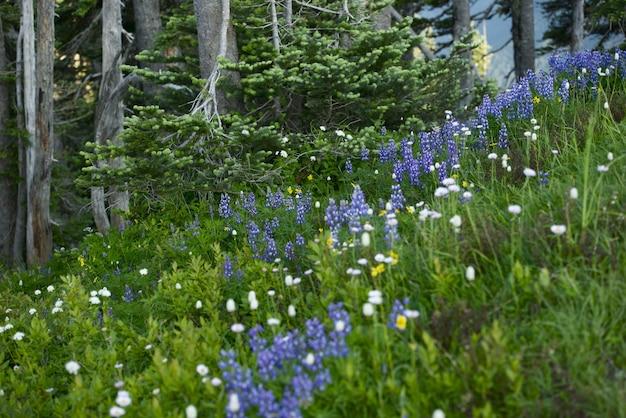Wildflowers del noroeste