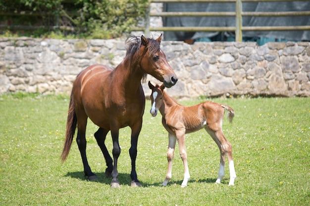 Yegua y caballo recién nacido