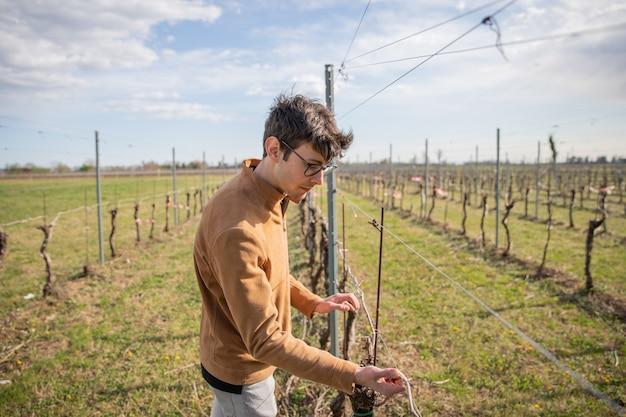 Young farmer arregla una vid en su viñedo.