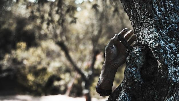 Zombie brazo colgando de un árbol en el bosque soleado