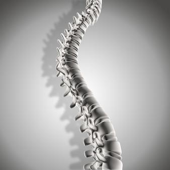 3d rendering di un primo piano della colonna vertebrale