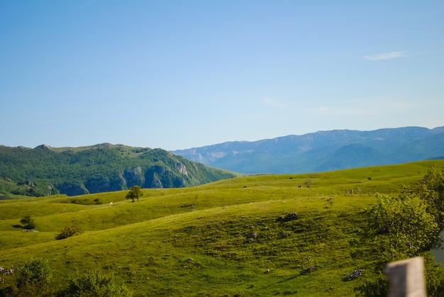 A nord del montenegro, il territorio della riserva zabljak