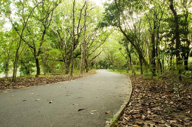 A piedi / in bicicletta / percorso di corsa in esecuzione nella foresta all'aperto nella natura soleggiata.