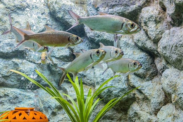 A proposito di pesce di mare e pesce d'acqua dolce in acquario