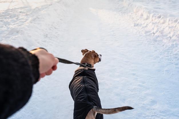 A spasso con un cane in cappotto in una fredda giornata invernale. persona con un cane in caldo parka al guinzaglio in un parco, dal punto di vista del proprietario