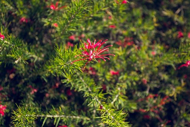 Abbassamento del cespuglio tropicale nel giardino botanico di cap roig