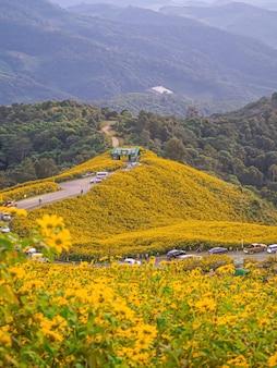 Abbellisca il giacimento del girasole messicano di tung bua tong del fiore della natura, mae hong son, tailandia