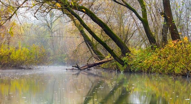 Abbellisca l'immagine con nebbia sopra il fiume o il lago e gli alberi verdi