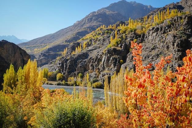 Abbellisca la vista degli alberi variopinti in autunno contro la catena montuosa di hindu kush