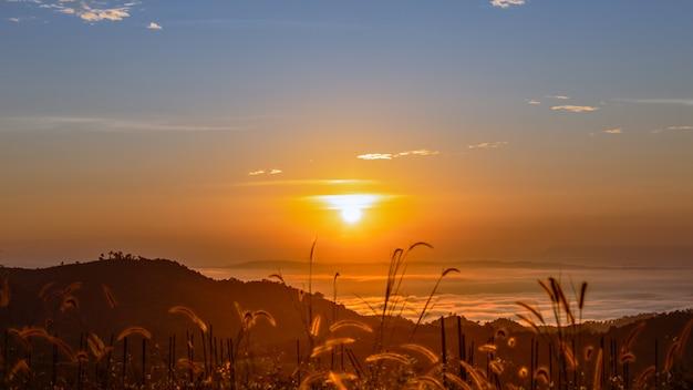 Abbellisca variopinto a tempo di mattina sopra la siluetta dell'erba del fondo e della foschia dell'alba e di alba