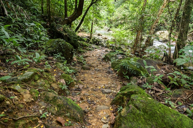 Abbondante foresta in thailandia