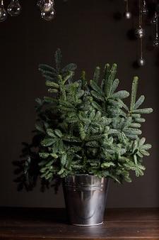 Abete verde fresco o rami di abies nobilis in un secchio di ferro su un tavolo di legno scuro