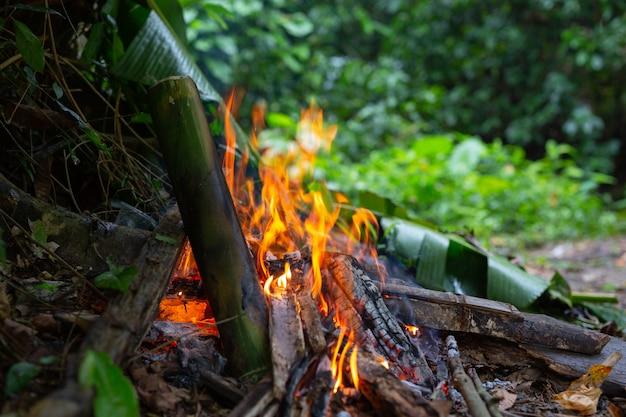 Accendere il fuoco nella foresta per il campeggio.
