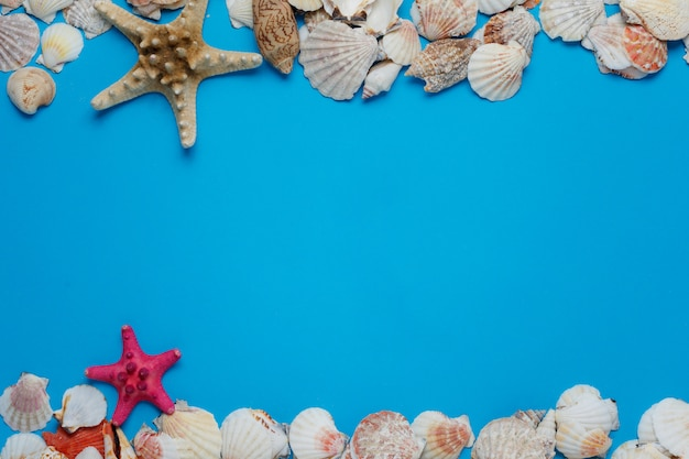 Accumulazione variopinta della natura del seashell dell'oceano delle stelle marine