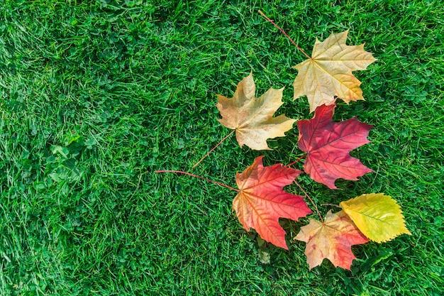 Acero foglia d'autunno su erba verde